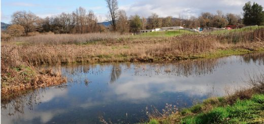 Winter-Willits-Wetland