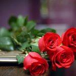 roses-161