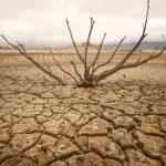 drought-780x405