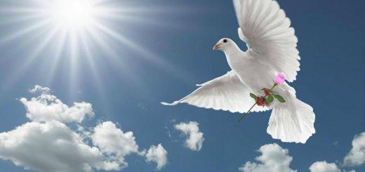 islam_religiya_miliserdiya_00